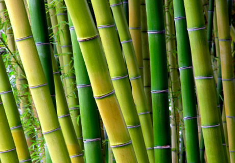 Bambus Matratzen