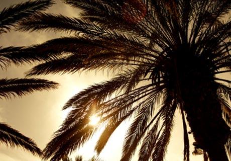 Matratzen Palmblättern