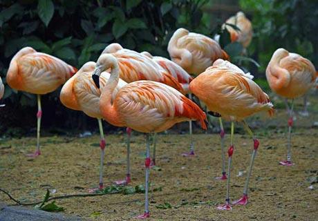 Auf einem Bein… wie ein Flamingo!