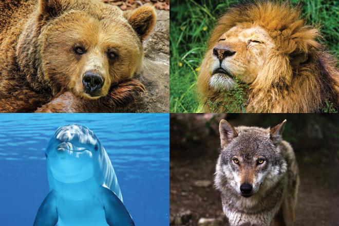 Schlafen Sie wie Bär, ein Löwe, ein Delphin oder ein Wolf?