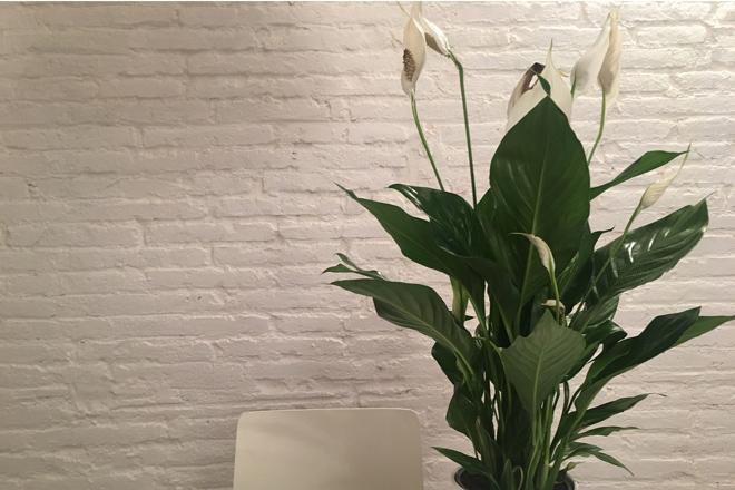 6 Schlaffördernde Pflanzen, Die Sie In Ihrem Schlafzimmer Stehen Haben  Sollten