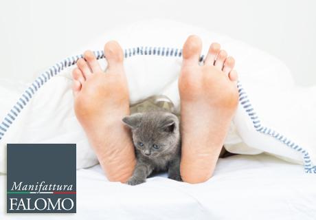 Schlafen mit den Haustiere: sind Sie einer von denen?