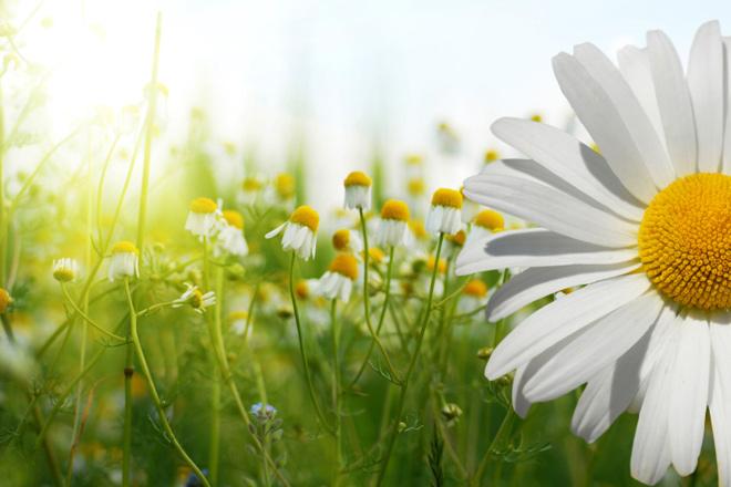 5 Tipps für Allergiker um die Pollen aus Ihrem Zimmer zu entfernen!