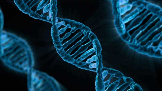 Die Entdeckung des Schlaf-Gens ABCC9