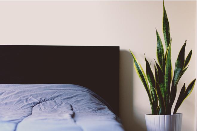 6 Schlaffordernde Pflanzen Die Sie In Ihrem Schlafzimmer Stehen