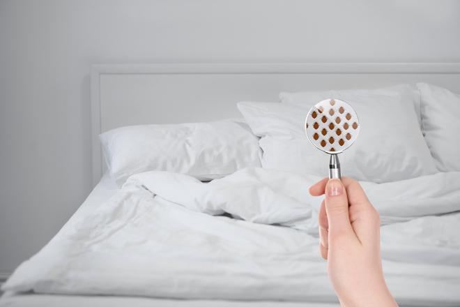 Bettwäsche: 10 hilfreiche Tipps zur richtigen Wahl