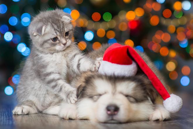 5 Ratschläge, um während der weihnachtlichen Urlaubszeit den Social Jetlag zu bekämpfen