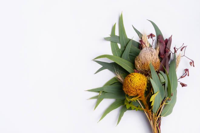 Australische Buschblüten: natürliche Heilmittel für einen gesunden Schlaf